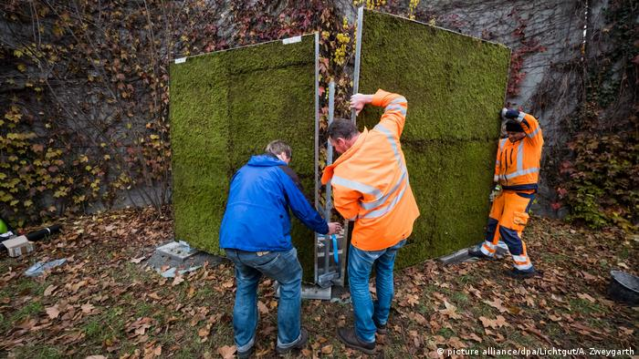 Germany: Installation of the Moss Wall (picture alliance/dpa/Lichtgut/A. Zweygarth)