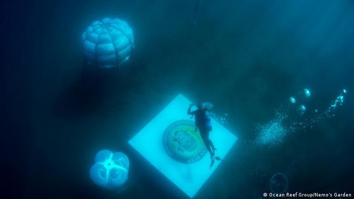 Italien | Nemo's Garden (Ocean Reef Group/Nemo's Garden)