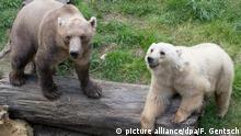 Hybridbären (picture alliance/dpa/F. Gentsch)