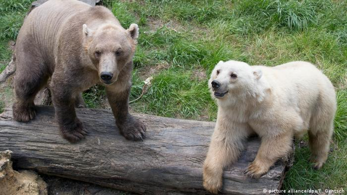 'Escaped' bear shot dead at German zoo