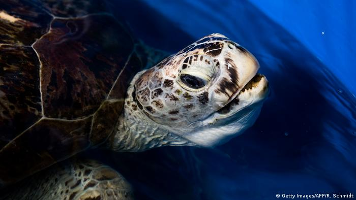 A close-up of a sea turtle's head as it emerges from the water