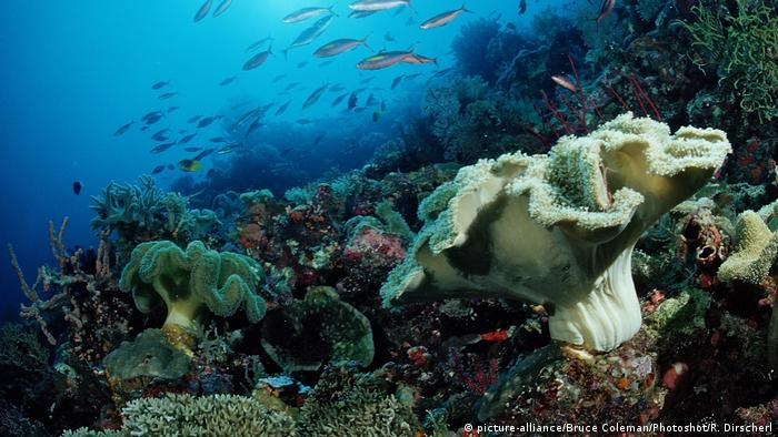 Photo of a coral reef (picture-alliance/Bruce Coleman/Photoshot/R. Dirscherl)