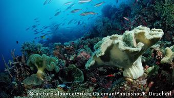 Barrera de coral en Indonesia.