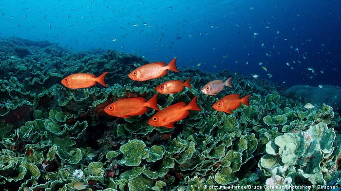 Indonesien Raja Ampat (picture-alliance/Bruce Coleman/Photoshot/R. Dirscherl)