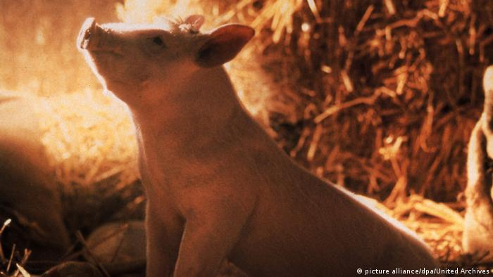Ein Schweinchen namens Babe (picture alliance/dpa/United Archives)