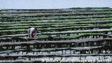 Frankreich Austernbaenke in der Bretagne (picture-alliance/vintage.de/B. Juettner)