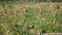 machambas Inhambane