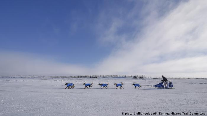 Iditarod (picture alliance/dpa/M. Kenney/Iditarod Trail Committee)