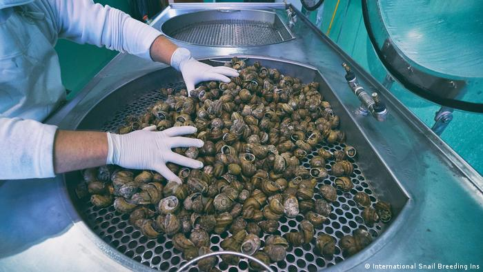 Demand For Natural Cosmetics Drives Snail Slime Boom In