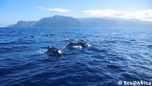 Eco@Africa - Wale - Canary Islands