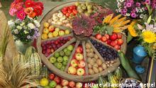 Zum Erntedankfest ist der Altarplatz in der Dorfkirche Stürza mit Äpfeln, Birnen, Pflaumen, Kartoffeln, Kürbissen und weiterem Gemüse, Eiern und Blumen geschmückt, aufgenommen am 18.09.2011. Als Gefäss für das Obst und Gemüse wurde ein altes Holzwagenrad eines Bauernwagen verwendet. Foto: Rainer Oettel/dpa-Zentralbild/ZB | Verwendung weltweit