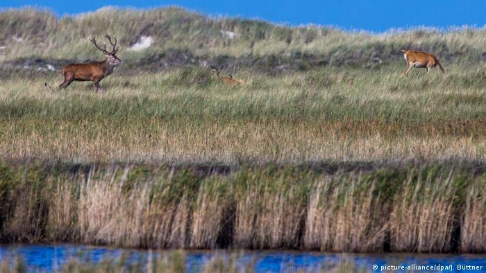Национальный парк Переднепомеранские лагуны