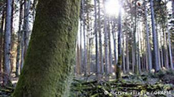 Wald in Deutschland (Foto: picture alliance)