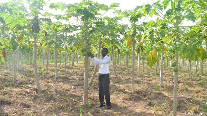Michael Osei Appiah von M.G. Farms in Ghana