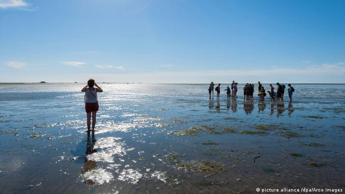 Wadden Sea (picture alliance /dpa/Arco Images)