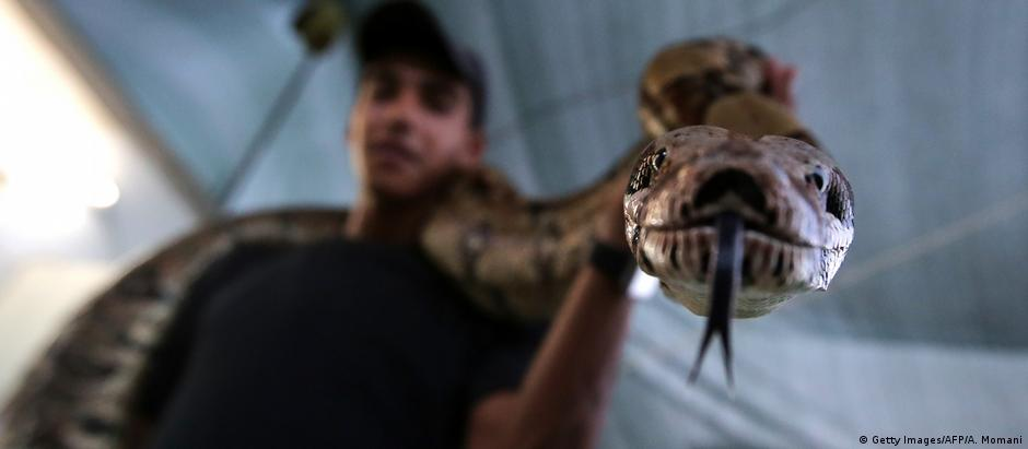 Python Symbobild (Getty Images/AFP/A. Momani)