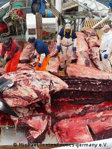 Zerlegte Zwergwale Norwegen