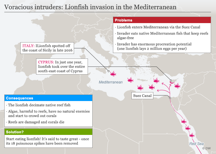 Infografik Karte Lionfish invasion in the Mediterranean