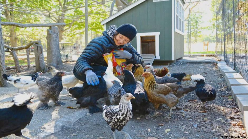 Isabella Rossellini: My chickens and I | All media content | DW | 31.03.2017