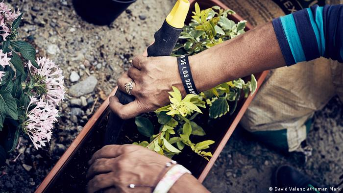 A citizen of San Javier plants flowers (David Valencia/Human Mark)
