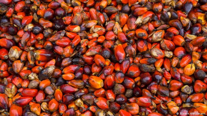 The red fruits of the oil palm laid out after harvest