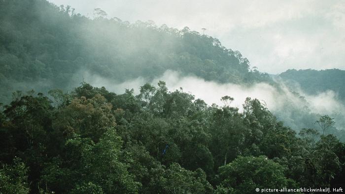 Indonesien Bergregenwald Sulawesi (picture-alliance/blickwinkel/J. Haft)