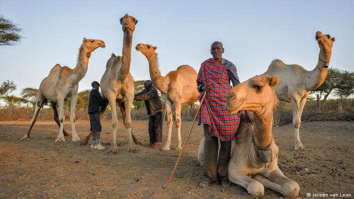 Kenia Camelmilk- Masai Samuel Maya with some of his camels (Jeroen van Loon)