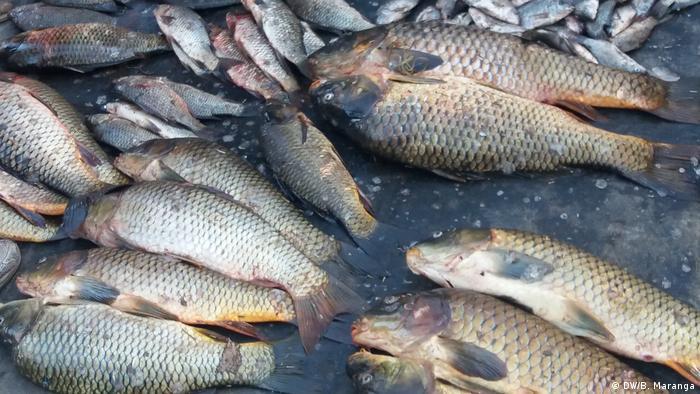 Dead fish Lake Naivasha