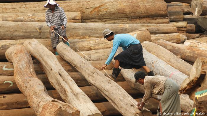 Burmese workers measure and record teak logs in a wood yard in Yangon, Myanmar (picture-alliance/dpa/B. Walton)