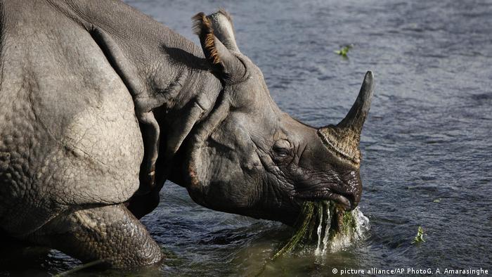 Poachers kill one-horned rhinoceros in Nepal national wildlife park