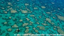 Australien ARC Studie - Coral Reef (ARC Centre of Excellence for Coral Reef Studies)