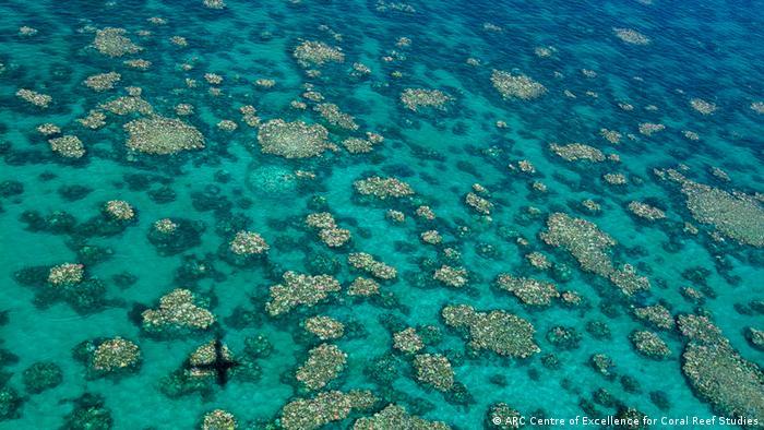 Australien ARC Studie - Coral Reef