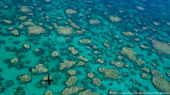 Gran Barrera de Coral de Australia (ARC Centre of Excellence for Coral Reef Studies)