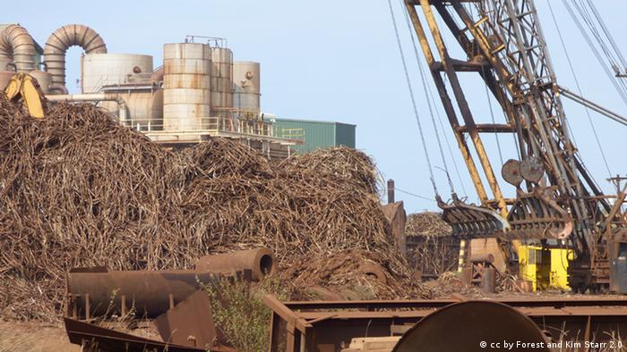 The last large-scale sugar mill harvest in Maui