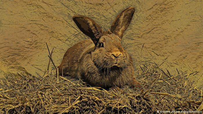 Hase in der Kunst (picture alliance/dpa/Antonius)