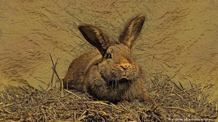 """Antonius: """"Conejo en el nido"""""""