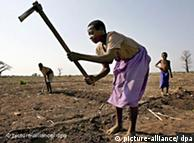 Especialistas pedem apoio aos pequenos agricultores nos países em desenvolvimento