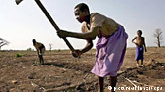 A smallholder tends his land in Malawi