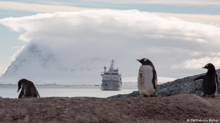 Antarctic Biennale 2017 | Schiff Pinguine (DW/Sabrina Walker)
