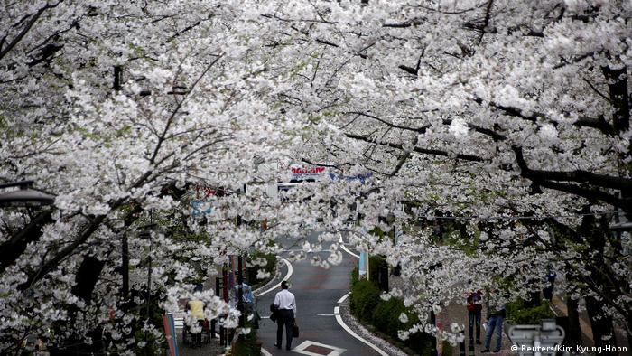 Japan - Kirschblütenfest Hanami 2017