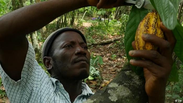 Sierra Leone Kakao (DW)