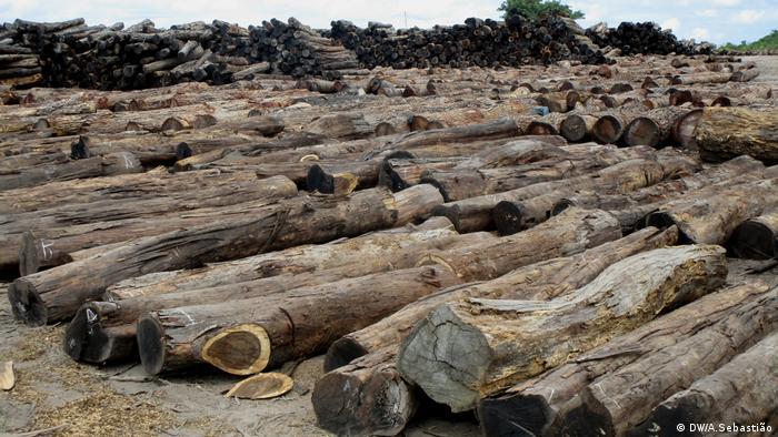 Moçambique perde anualmente entre 140 a 187 milhões de euros devido ao contrabando de madeira