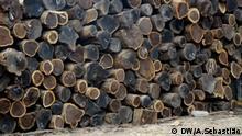 Illegal geschlagenes Holz in Beira, Mosambik