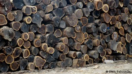 Image result for Analista defende maior controlo das florestas moçambicanas