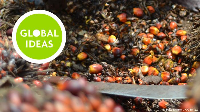 Teaser Global Ideas – Palm Oil Seeds _ mit Logo (Mike Norton / CC BY 2.0 )