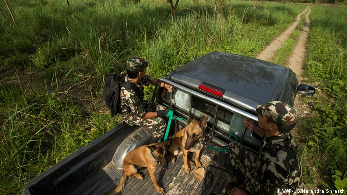 WWF Wildlife crime