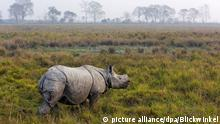 Greater Indian rhinoceros (picture alliance/dpa/Blickwinkel)