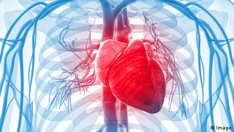 Graphic of a human heart in the upper torso.