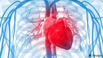 Изображение человеческого сердца