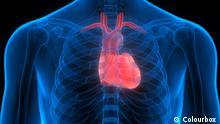 Herz Organ menschlicher Körper Illustration